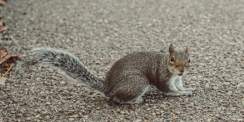 How To Get Rid Of Squirrels By Pest Control London?