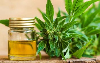 Everything you need to know about CBD.