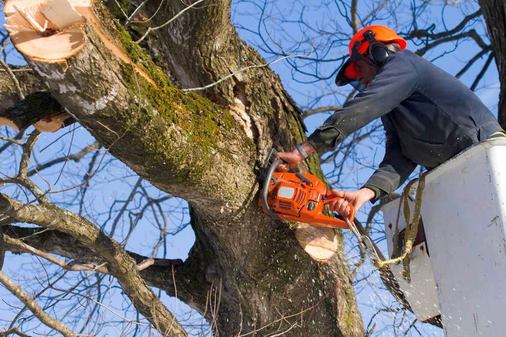 How to cut down a tall tree by yourself