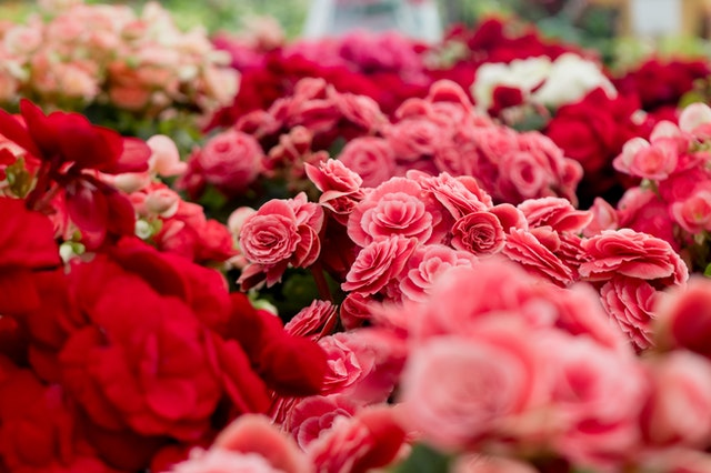 Her Heart Will Melt With These Exquisite Floral Gifts!!!!!